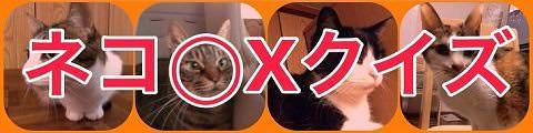 猫マルバツクイズ